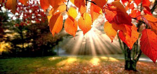 Oggi è iniziato l'autunno