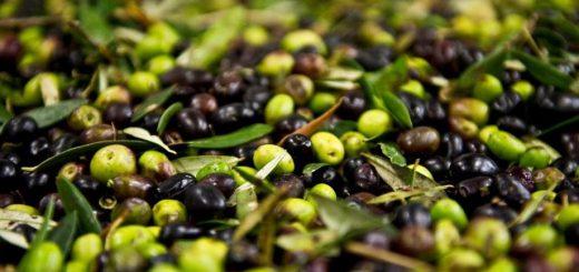 XXI^ Sagra delle Olive a Villamassargia - Dal 21 al 23 ottobre 2016