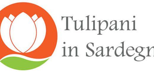 Tulipani in Sardegna 2019 a Turri